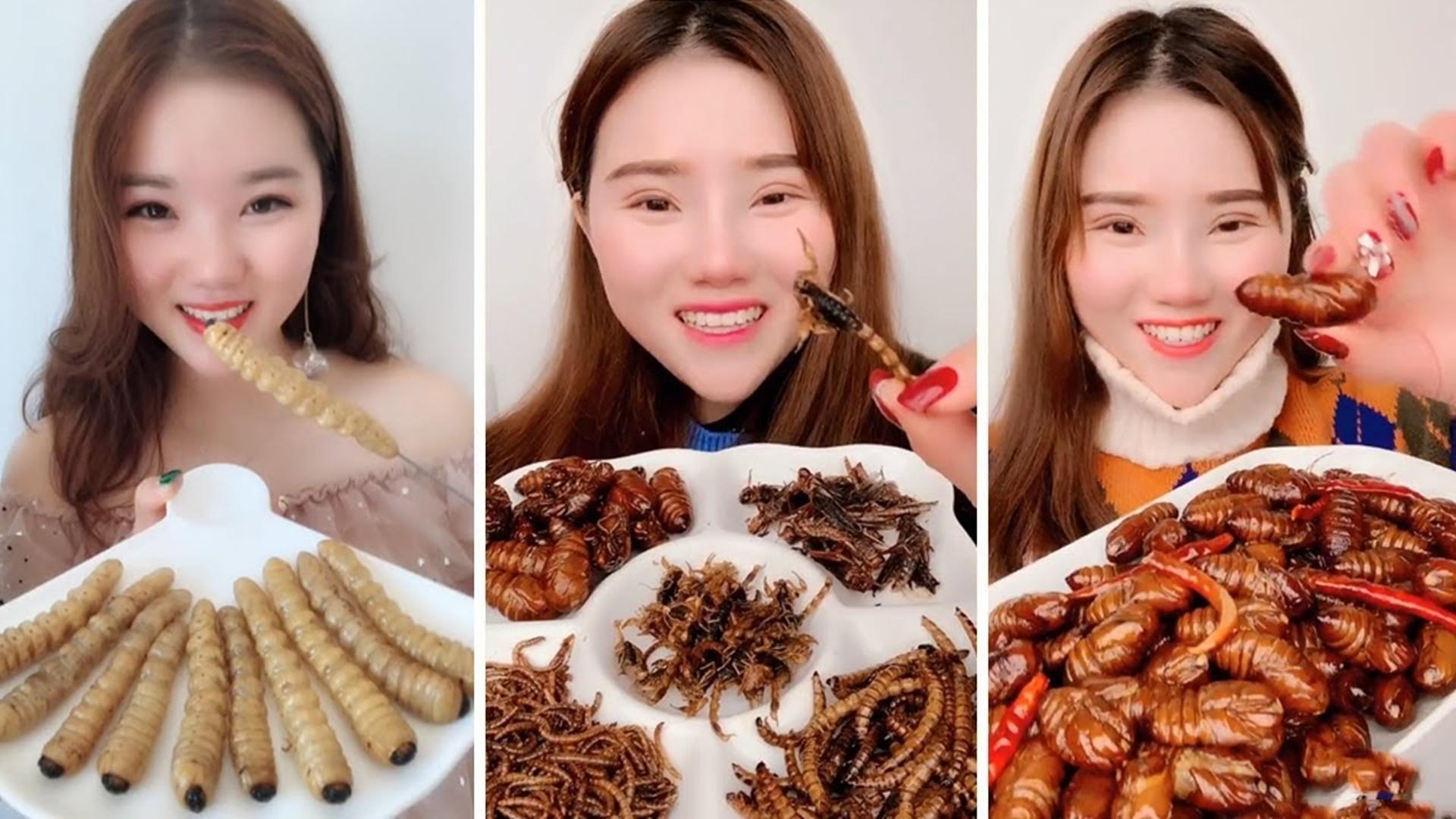Dijuluki Ratu Serangga , Makan tarantula, kumbang, Kalajengking